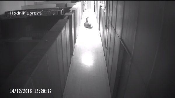Security Camera Video